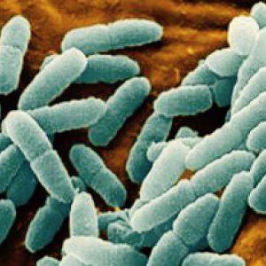 В Ульяновской сметане нашли антибиотики и гормоны