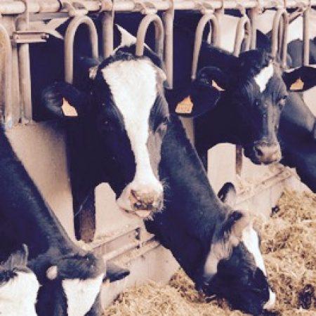 Нетерапевтические антибиотики в животноводстве