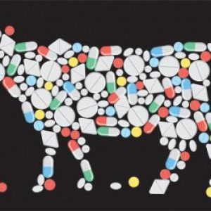 Как выбрать мясо без антибиотиков?