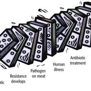 Риски остаточных количеств антибиотиков в мясе