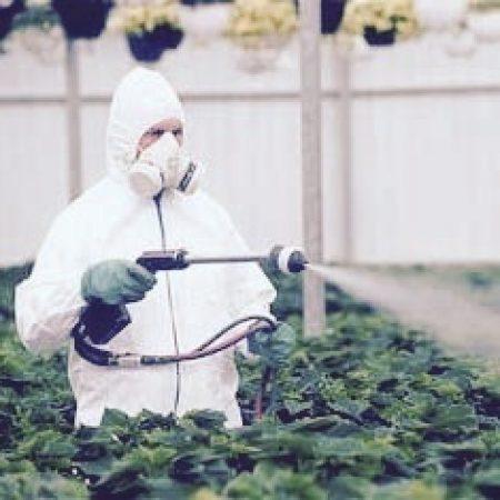 Применение антибиотиков для защиты растений