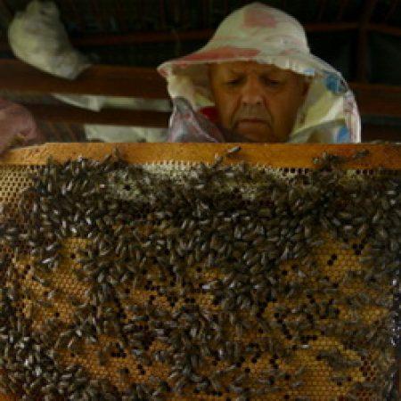 Контроль за медом усилили из-за Китая