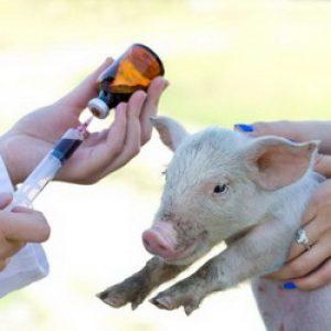 Фермеры не воспринимают всерьез вред антибиотиков