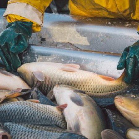На аквакультуру распространили новый закон