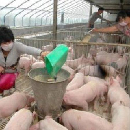 Китай откажется от кормовых антибиотиков к 2020 году