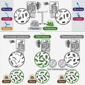 исследование пробиотиков