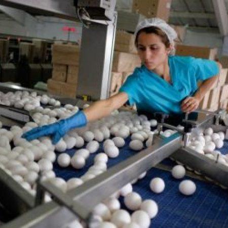 Яйца без антибиотиков в Ленобласти