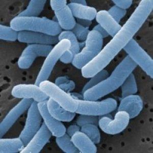 Пробиотики могут вызывать заражение крови
