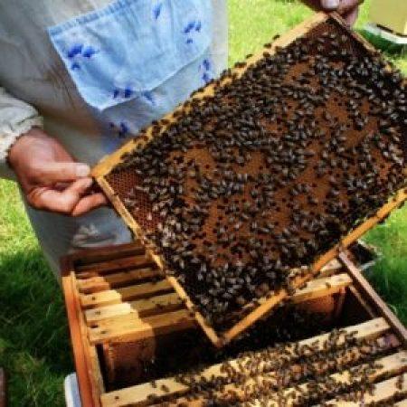 Мед без антибиотиков от пчеловоов ЕАО