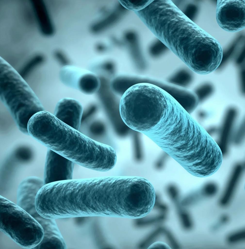Показана причина появления множественной резистентности бактерий к антибиотикам